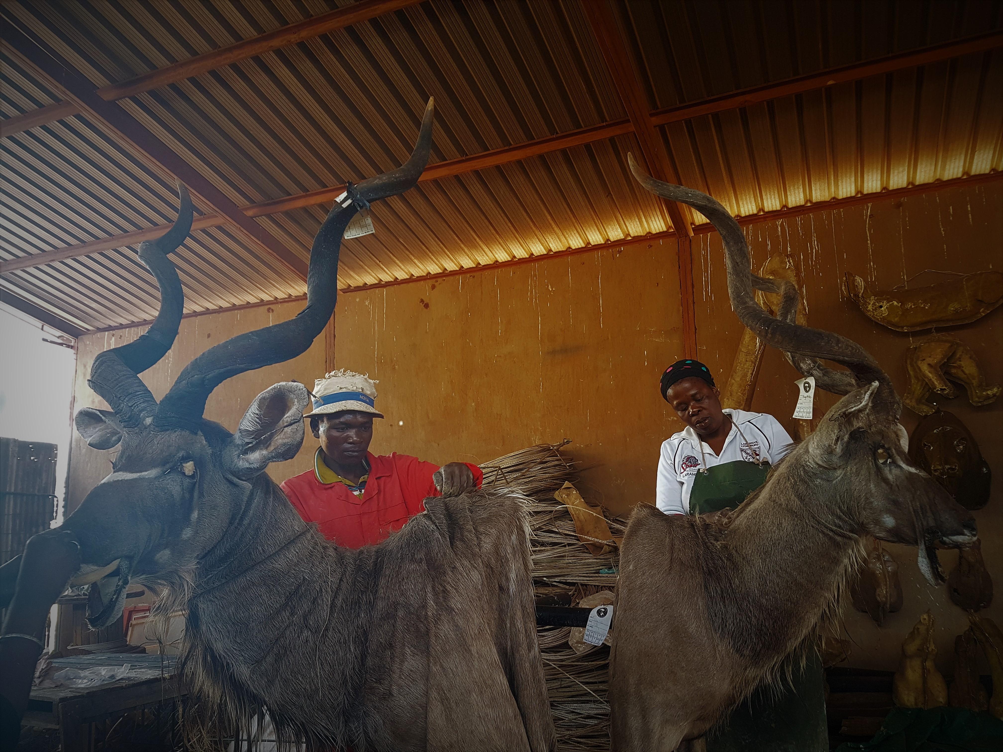 Taxidermy – Infinito Safaris