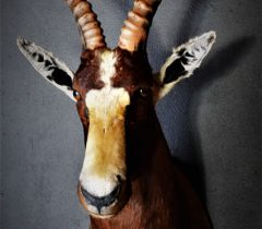 Infinito Taxidermy Services